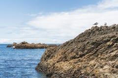 Cópia-espaço dos selos e dos pássaros em rochas intertidal foto de stock