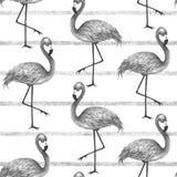 Cópia moderna popular do estilo com flamingo Alinhador longitudinal sem emenda na moda ilustração stock