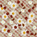 Cópia quadriculado floral sem emenda bonita com as flores do cosmos e da margarida Projeto do verão do vetor ilustração royalty free