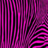 Cópia sem emenda da zebra. Fotos de Stock Royalty Free
