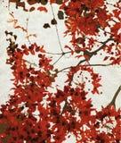 Cópia vermelha da flor no papel gredoso Foto de Stock Royalty Free