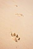 Cópias da pata do cão na praia fotos de stock
