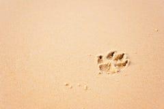 Cópias da pata do cão na praia foto de stock royalty free