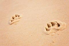 Cópias da pata do cão na praia imagens de stock