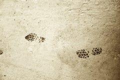 Cópias da sapata na lama seca Imagens de Stock
