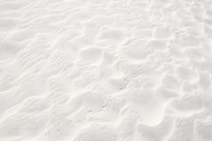 Cópias do pássaro na areia Fotografia de Stock Royalty Free