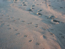 Cópias do pé da gaivota na areia Fotografia de Stock Royalty Free