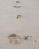 Cópias do pé em um Sandy Beach Imagens de Stock