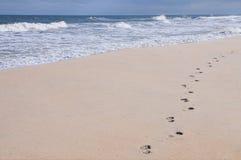 Cópias do pé em uma praia arenosa Foto de Stock Royalty Free