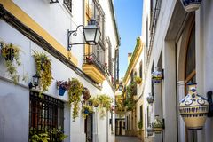 Córdoba: calle típica vieja en el Juderia con las plantas y las flores Andalucía, España imágenes de archivo libres de regalías