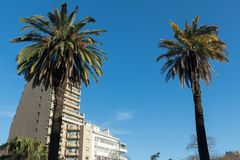 Córdoba summer. A picture from cordoba argentina and his beautiful landscape . Some palms trow in there royalty free stock image