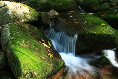Córrego Imagem de Stock Royalty Free