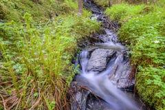 Córrego Fotografia de Stock Royalty Free
