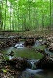 Córrego arborizado Fotografia de Stock
