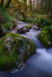 Córrego através da floresta Imagens de Stock Royalty Free