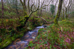 Córrego através da floresta do carvalho Imagens de Stock Royalty Free