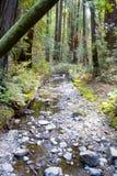 Córrego através das madeiras de Muir Foto de Stock Royalty Free
