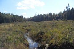 Córrego através do pântano Imagem de Stock