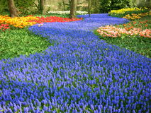 Córrego azul das flores Imagem de Stock