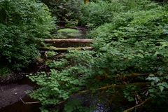 Córrego balbuciante Fotografia de Stock
