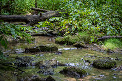 Córrego bonito fotos de stock royalty free
