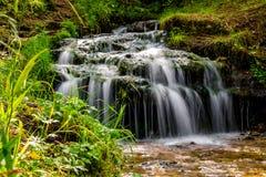 Córrego bonito da floresta, cachoeira pequena imagem de stock royalty free
