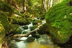 Córrego bonito da montanha com Moss Covered Stones Fotos de Stock Royalty Free