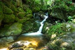 Córrego bonito da montanha com Moss Covered Stones Foto de Stock