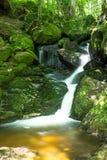 Córrego bonito da montanha com Moss Covered Stones Fotografia de Stock