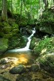 Córrego bonito da montanha com Moss Covered Stones Imagens de Stock