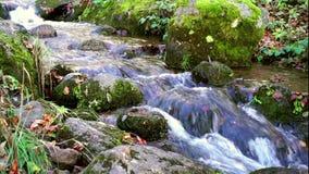 Córrego bonito da montanha profundamente em Forest In Autumn vídeos de arquivo