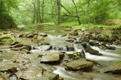 Córrego cénico na floresta Imagens de Stock