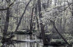 Córrego calmo Fotografia de Stock Royalty Free