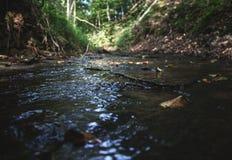 Córrego calmo Fotografia de Stock