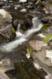 Córrego calmo da floresta Foto de Stock