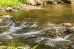 Córrego calmo da floresta Imagem de Stock