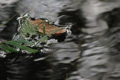 Córrego calmo de flutuação da folha Imagem de Stock