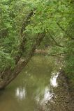 Córrego com árvore de inclinação Foto de Stock