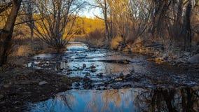 Córrego com as árvores do inverno refletidas na água fotos de stock