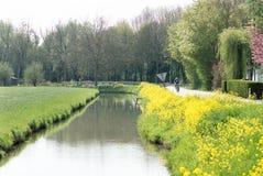 Córrego com as flores amarelas da colza Imagem de Stock