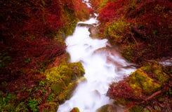Córrego com cores intensas V Foto de Stock Royalty Free
