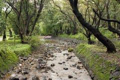 Córrego da água através da floresta Fotos de Stock