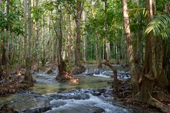 Córrego da água em uma selva Fotos de Stock Royalty Free