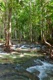 Córrego da água em uma selva Imagens de Stock