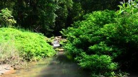 Córrego da água na floresta filme