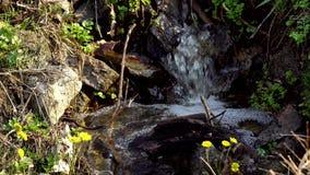 Córrego da água que corre através de rochas video estoque