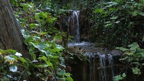 Córrego da cascata na floresta em um parque natural vídeos de arquivo