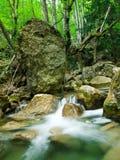Córrego da floresta Imagem de Stock