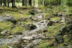 Córrego da floresta Foto de Stock