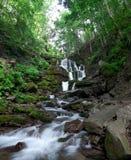 Córrego da floresta. Imagens de Stock Royalty Free